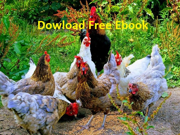 Download a Free Chicken Farming eBook
