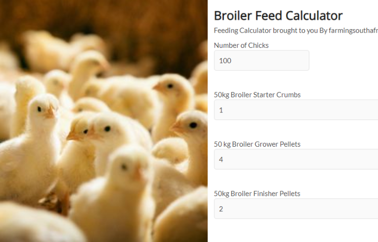 Free feeding Calculator